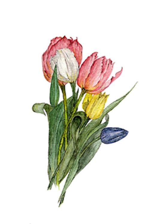Tulip Rainbow (BP-0033)