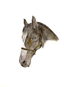 Duchess (Horse) LPSN.jpg