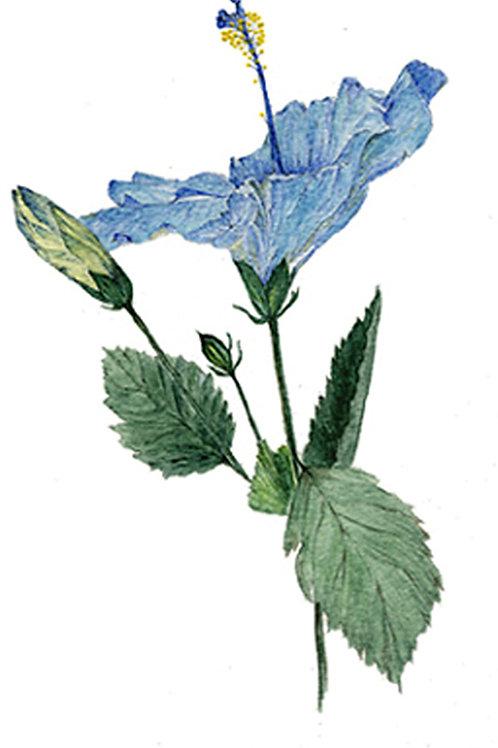 Blue Hibiscus (BP-0037)