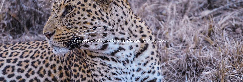 AFAL-004(p)  Leopard