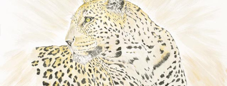 S. African Leopard UP-0016(s)
