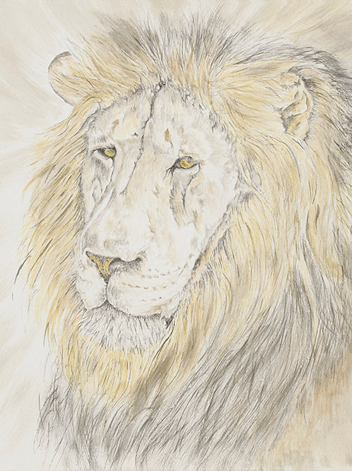 S. African Lion , UP-0015(s)