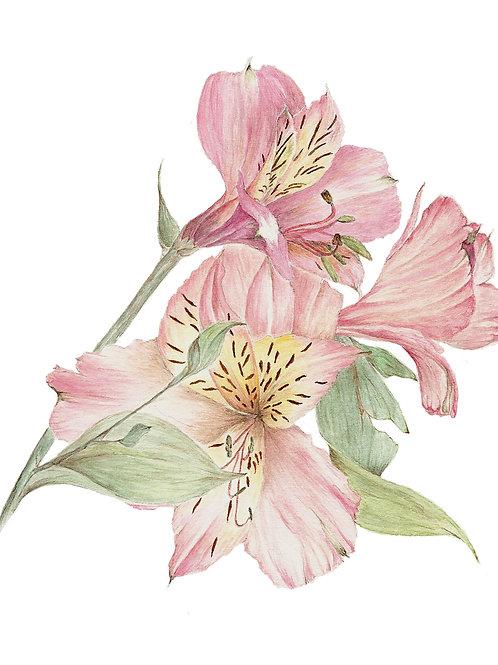 Chilean Lily (BP-0048)