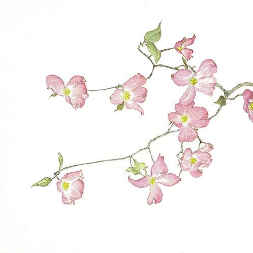 Pink Dogwood  BP-0054(s)