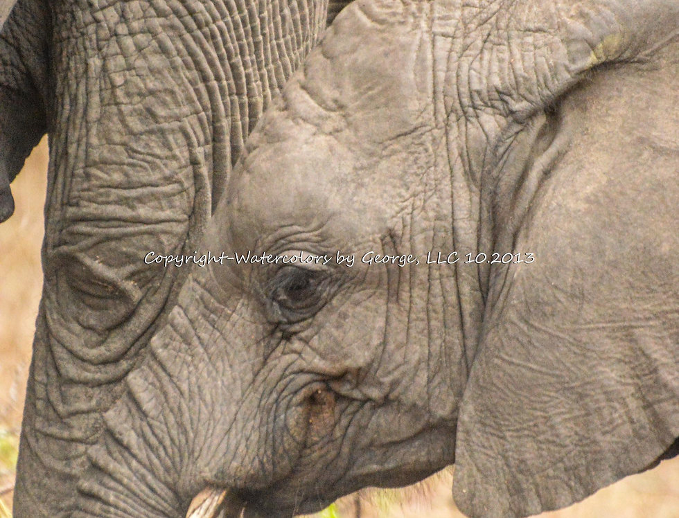 AFAL-011(p)  Mom and Son (Elephant)