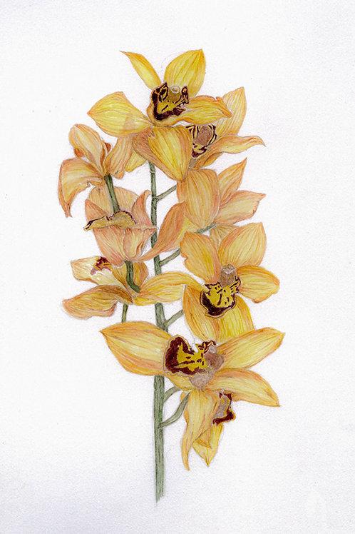 Bronze Orchid III