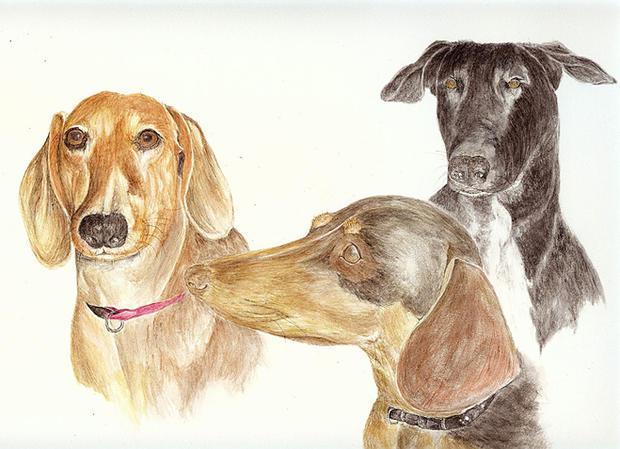 Dogs-+Farlee+%28big+red%29%2CFergie%28Pe