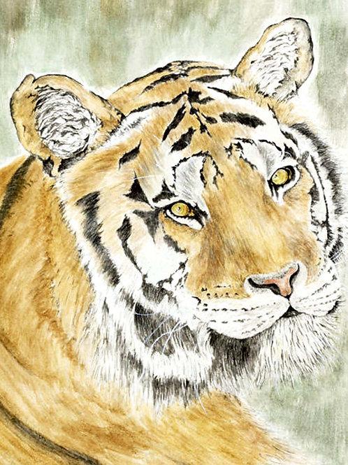 Bengal  Tiger (UP-0060)