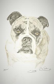 Bulldog 2 (2).jpg