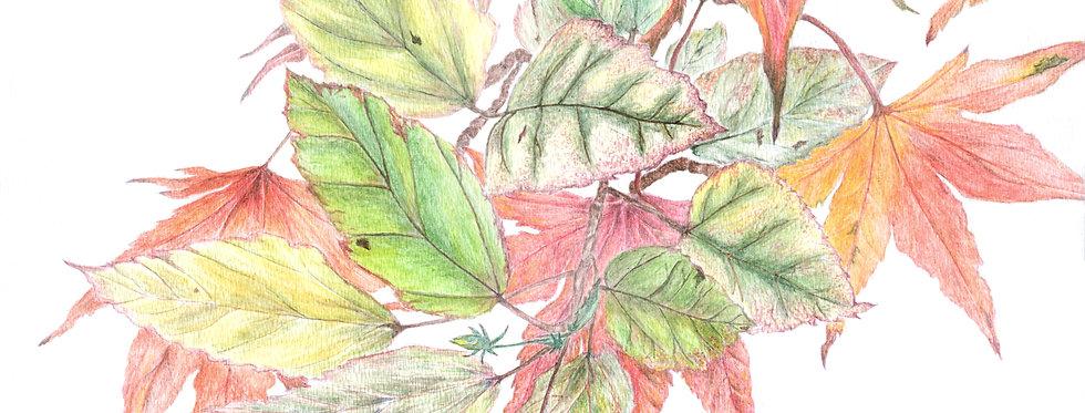 Autumn Accent -BP-0063(s)