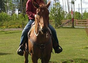 Buzz-the Wild Horse