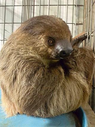 Sloth_edited.jpg