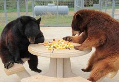 bears+den+1.jpg