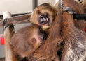 Jack and Janet sloths.jpg