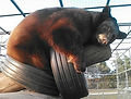 bailey napping in tire swing.jpg