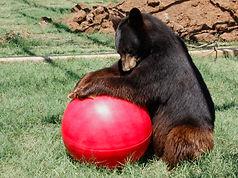 The+Bears+007.jpg