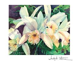 029_Hanks_Orchids_H_web_signature.jpg