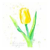 501_yellow_tulip2_WEB.jpg