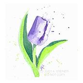 506_purple_tulip_WEB.jpg