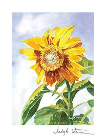 221_Sunflower_web_signature.jpg