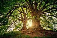 enseignement des arbres.jpg