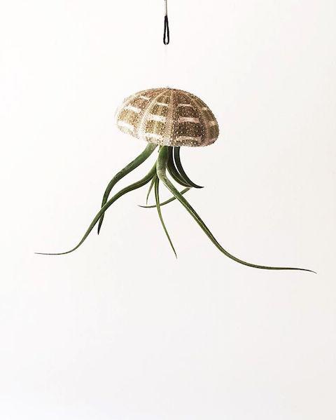 jellyfish airplant