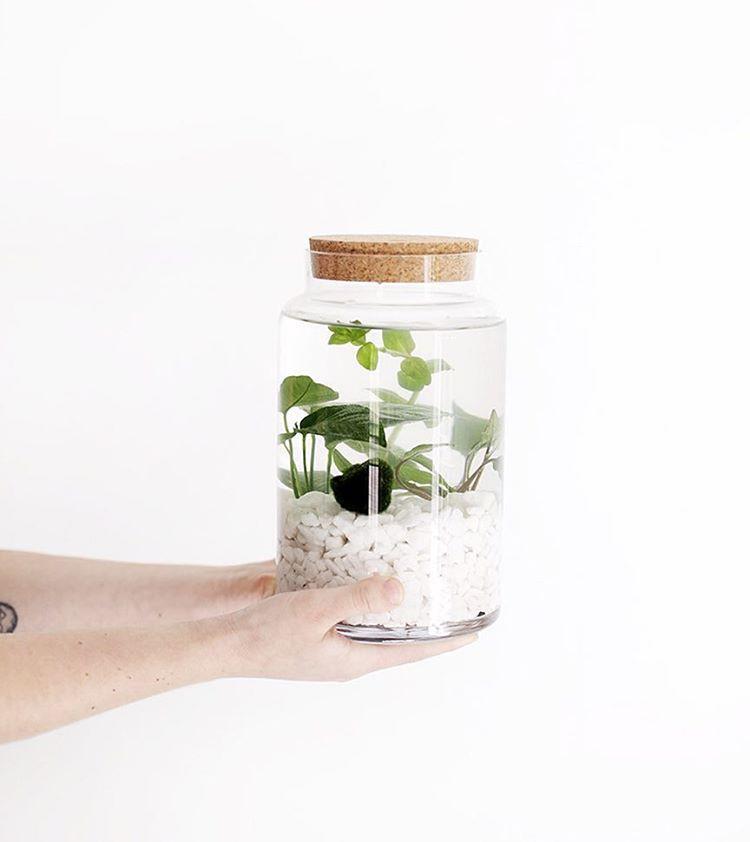 water garden jar