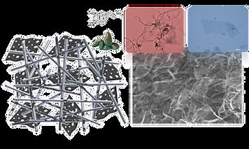 COMEL | Nanocarbons, Organics