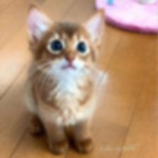 あたちって可愛いデチョ?😺_なお顔かしら?!( _´艸`)__ネフェル子