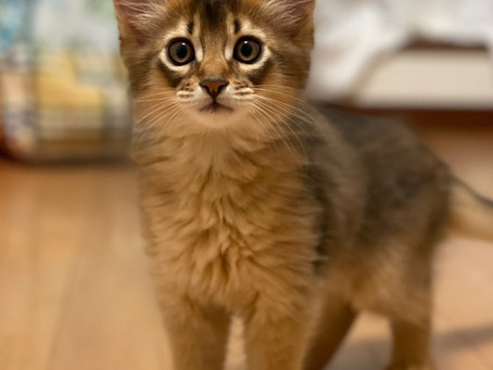 ソマリルディの子猫♡