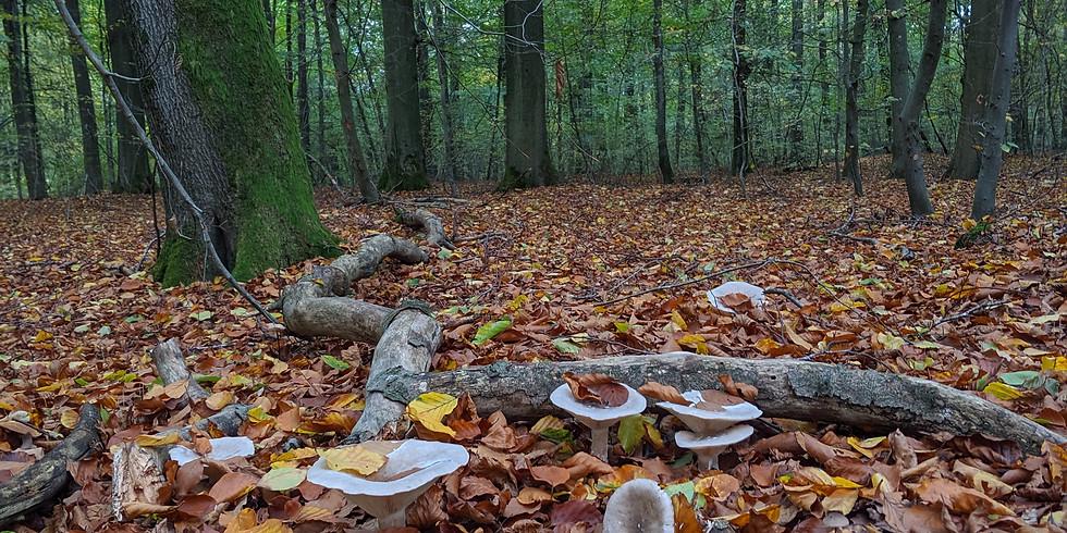 Grounding and Gratitude October Retreat
