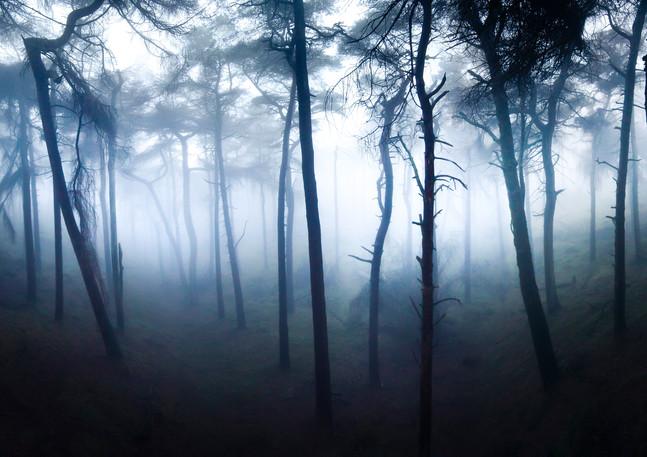 trees pano.jpg