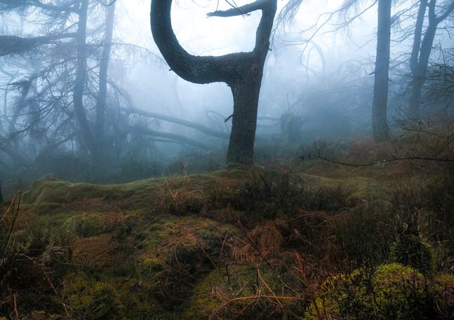 Tree 1 a.jpg