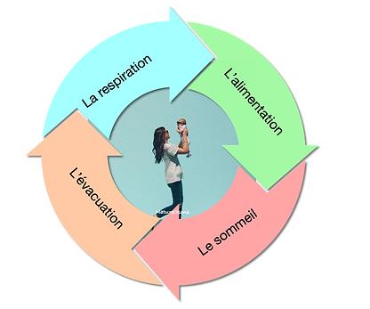 le cycle de la vie.png