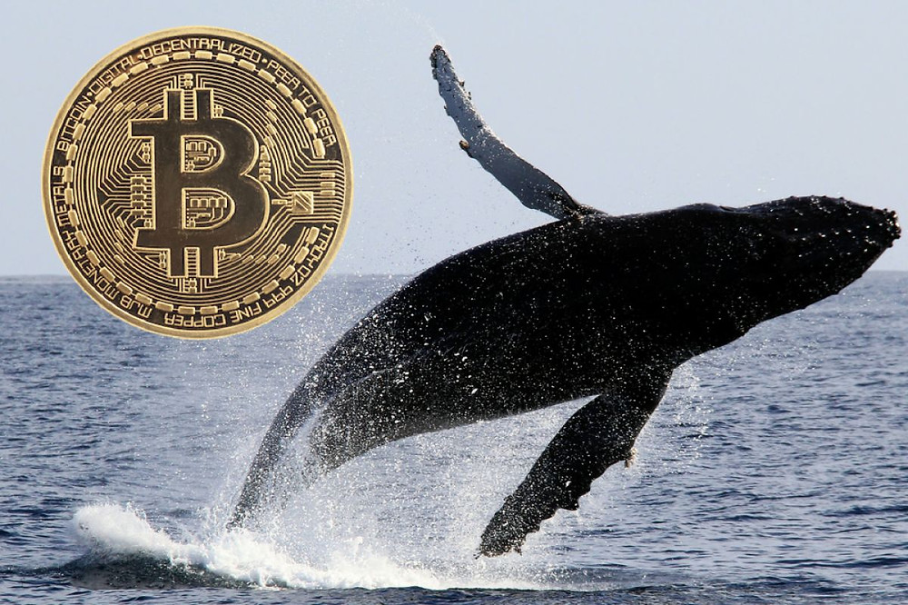 50k BTC Moved Between Bitcoin Whales, Community Predicts Price Increase