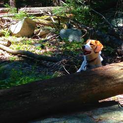 nikki ny peeking over log