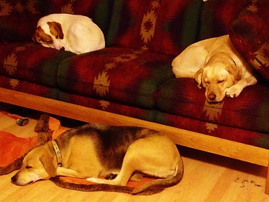 3 pups sleeping.jpg
