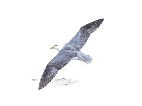 Supporting seabird research