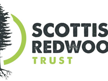 Response to the recent 'How the Scottish Redwood Trust came about' blog, by Tricia Anderson