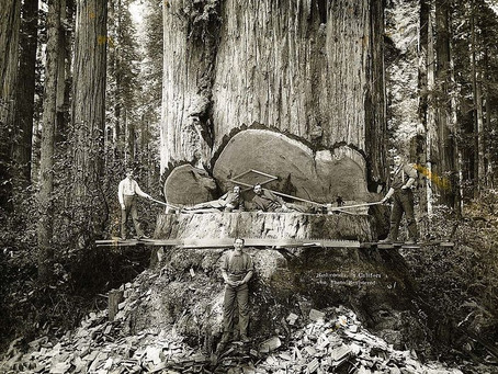 The Redwood Story - B.C. to 1848