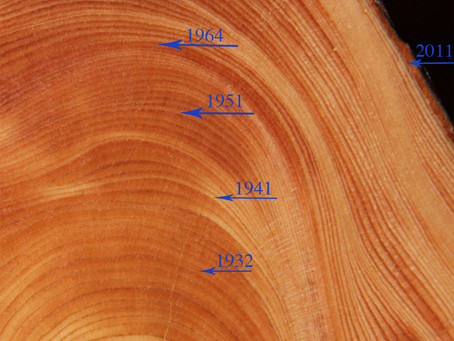 Dendrochronology by Peggy Edwards