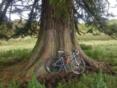 Scottish Redwoods: the perfect local adventure by Emily Bryson