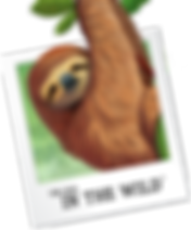 vbs2019Sloth.png