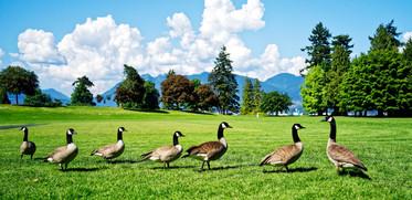 Canada BC 2015