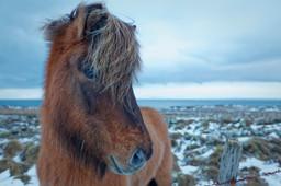 IJsland winter 2012