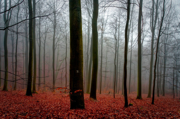 Duitsland Eifel 2015