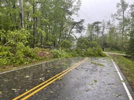 Street Tree Down.jpeg