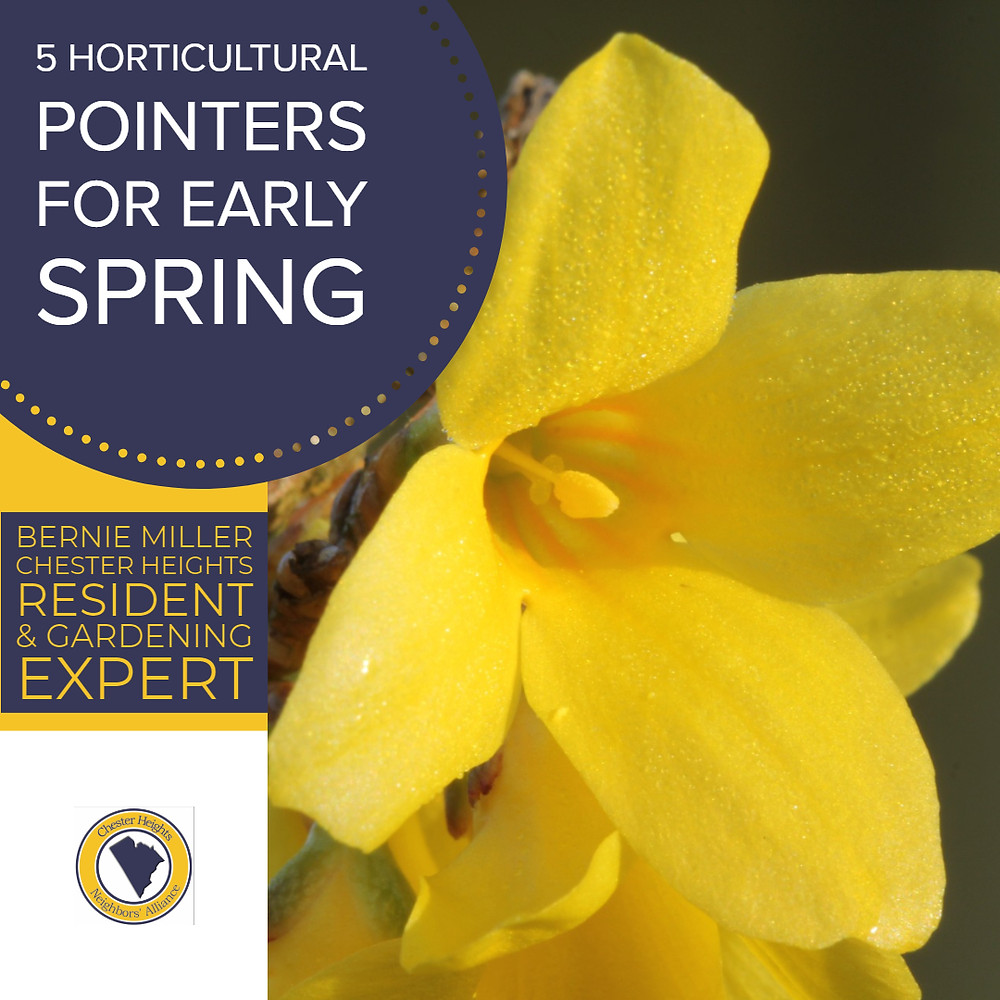 5 Gardening Pointers for Early Spring Chester Heights PA