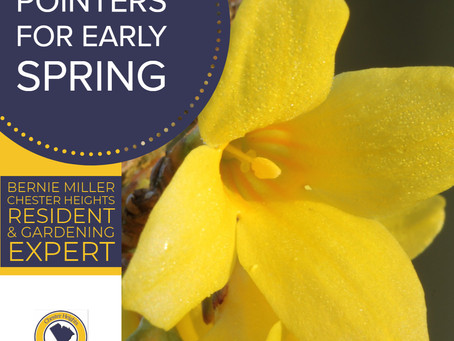 5 Horticultural Pointers for Early Spring
