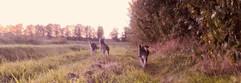 wandelen met de husky pups.jpg